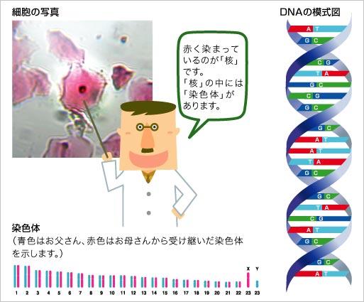 遺伝子とは | バイオ基礎コース ...